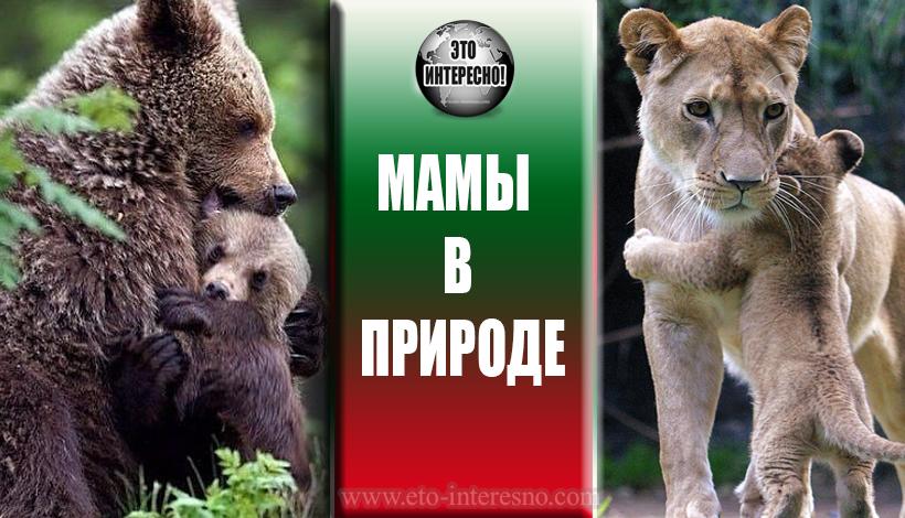 МАМЫ В ПРИРОДЕ (ТОП-10)