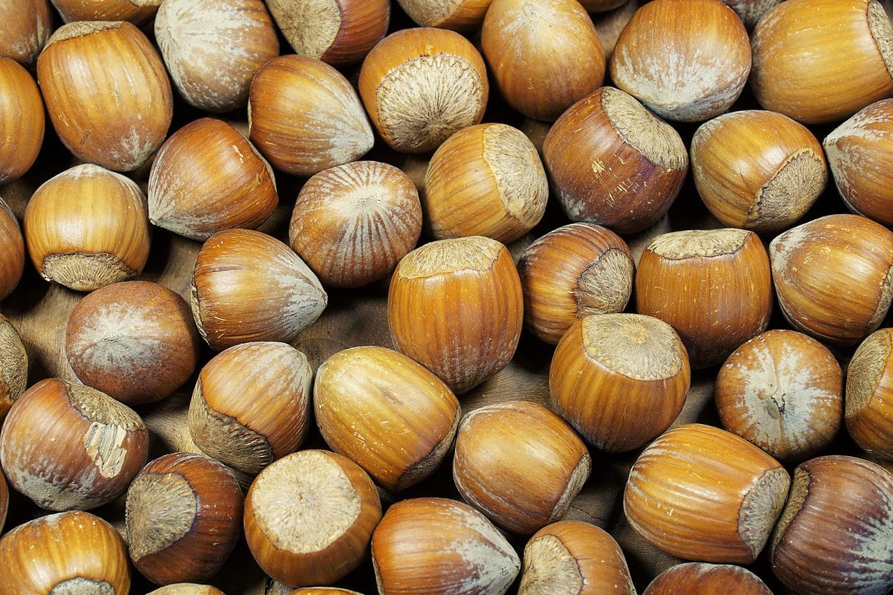 все виды орехов фото с названиями применим серый