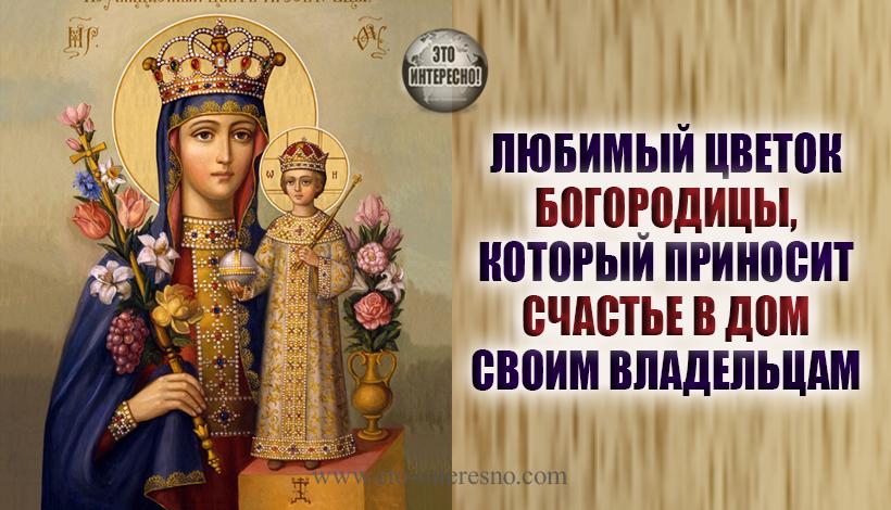 ЛЮБИМЫЙ ЦВЕТОК БОГОРОДИЦЫ, КОТОРЫЙ ПРИНОСИТ СЧАСТЬЕ В ДОМ СВОИМ ВЛАДЕЛЬЦАМ